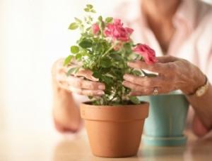 Imagem 126 de O Envelhecer e o papel da Aromaterapia para idosos!
