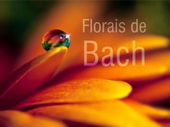 Imagem 148 de Os Florais de Bach